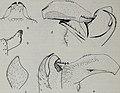 Tijdschrift voor entomologie (1984) (14779179351).jpg