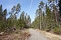 Tikkakoski - trail.jpg