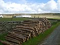 Timber stack - geograph.org.uk - 449440.jpg