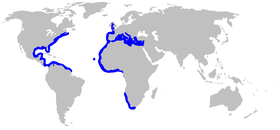 Range of the Atlantic torpedo
