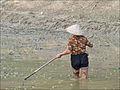 Travail dans les rizières (baie dHalong terrestre) (4368432841).jpg