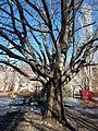 Tree in winter, playground behind Rona Street, 2017 Zuglo.jpg