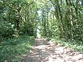 Tree lined bridleway near Ewood Farm - geograph.org.uk - 25698.jpg