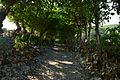 Tree passage.jpg