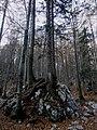 Trees (2955233364).jpg