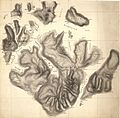 Tromskrokeringer Rektangel-mil; 24-10; 24-11; 24-12; 28-1; 28-2; 28-3; 28-4; 28-5; 28-6; 28-7; 28-8; 28-9; 28-10; 28-11; 28-12; 29-1; 29-5; 32-2; 32-3; 32-4, 1872.jpg