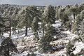 Troodos in winter, Cyprus - panoramio (6).jpg
