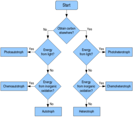 File troph flow wikimedia commons for Openoffice flowchart template