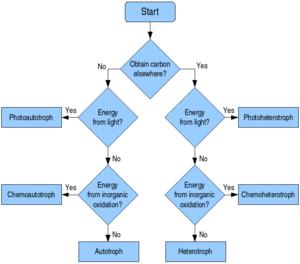 Quimioheterótrofo