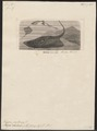 Trygon pastinaca - 1700-1880 - Print - Iconographia Zoologica - Special Collections University of Amsterdam - UBA01 IZ14200091.tif