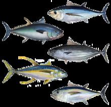 Tuna assortment.png