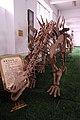 Tuojiangosaurus multispinus.jpg