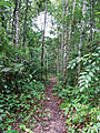 Type locality of Semachrysa jade - ZooKeys-214-001-g004.jpeg