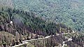 Uttarakhand Pine Forest.jpg
