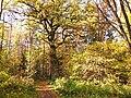 Vallaskogen höst.jpg