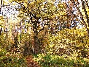 Valla Wood