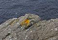 Ved kysten (1507901281).jpg