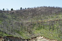 Waldbrand Wikipedia