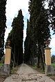 Villa antinori delle rose, viale alberato 01.JPG