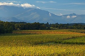 Vineyard - The extensive vineyards of the Languedoc-Roussillon region, southern France