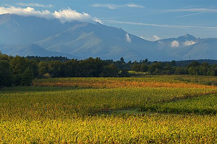 The extensive vineyards of the Languedoc-Roussillon region, southern France Vinepyrennees2.jpg