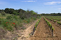 Vineyard, Pinet, Hérault 03.jpg