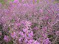 Violet flowers (1).jpg