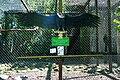 Vogelpark Walsrode - Vultur gryphus 01 ies.jpg