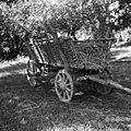 Voz z lesam (za prevoze iz oddaljenejših njiv), Orehovec 1956.jpg