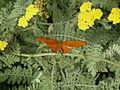 WPZ Butterflies & Blooms 09.jpg
