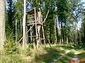 W lesie - panoramio (1).jpg