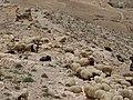 Wadi near Karak - panoramio (8).jpg