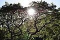 Waimea Valley Park (12604231033).jpg