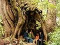 Walk of the Ancients, British Columbia - panoramio.jpg