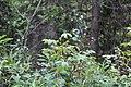 Wapta Falls Trail IMG 4931.JPG