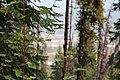 Wapta Falls Trail IMG 4996.JPG