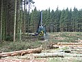 Wark Forest, men and machine at work. - geograph.org.uk - 117206.jpg