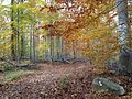 Watchung Reservation in the Fall 2013-11-05 00.jpg