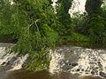 Water of Leith; June 15, 2014 07.jpg