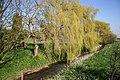 Weeping Willows - geograph.org.uk - 388164.jpg