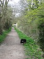 Wendover Arm, Looking along the Towpath towards Perch Bridge - geograph.org.uk - 1265444.jpg