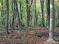West Woods - geograph.org.uk - 278336.jpg