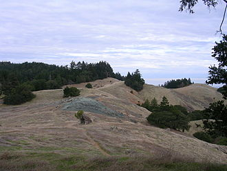 Mount Tamalpais - Open Douglas-fir/oak woodland/grassland to the west transitioning to a mostly dense Douglas-fir forest to the east