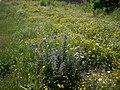 Wildflower garden - geograph.org.uk - 1383413.jpg