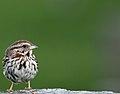 Wildlife birds 4 - West Virginia - ForestWander.jpg