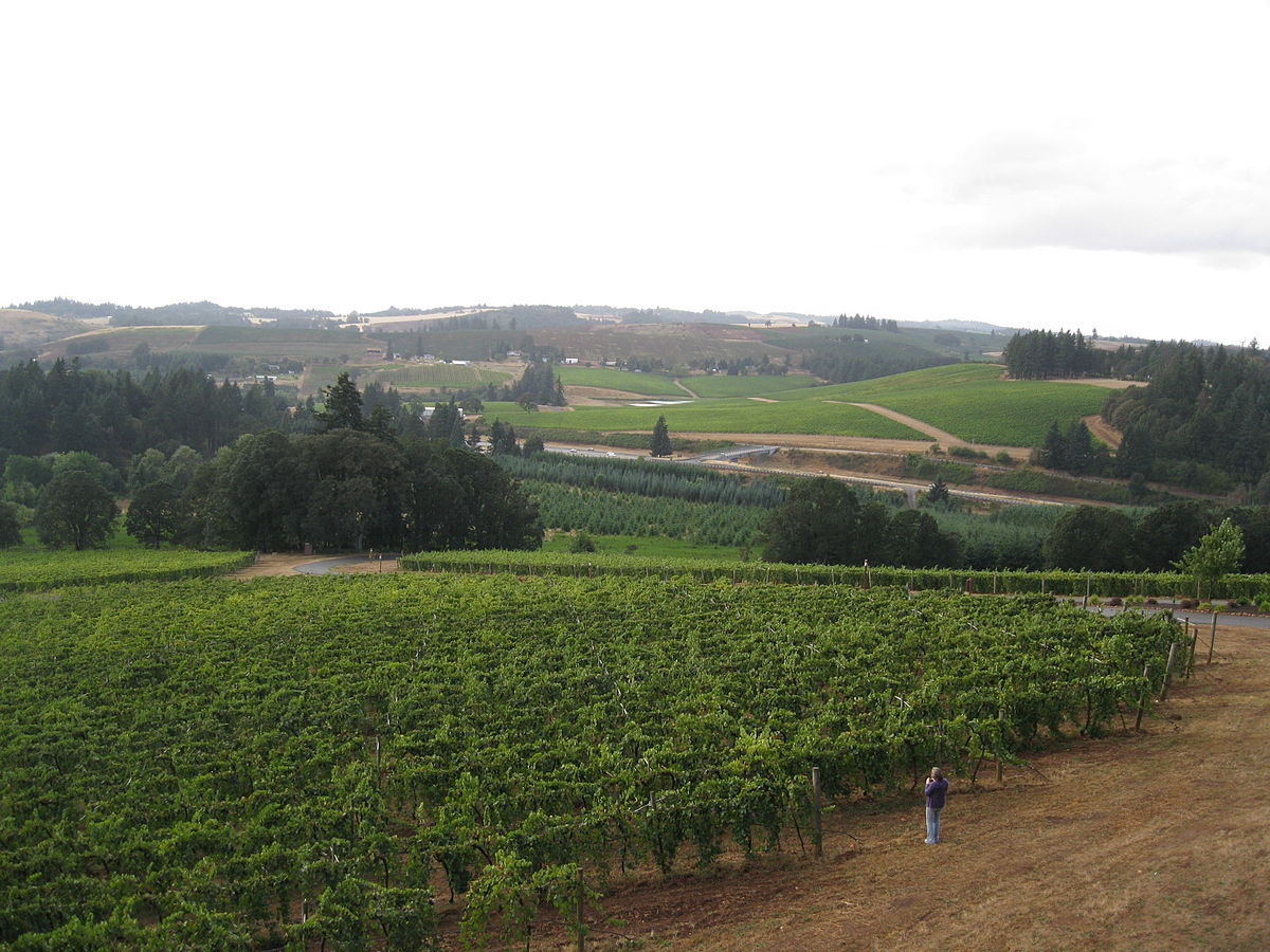 Willamette Valley Vineyards.jpg