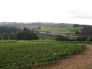 Vineyards in the Oregon wine region of Willame...
