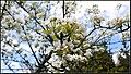 Wiosna w moim ogródku - panoramio.jpg