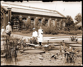 Victoria (plant) - Image: Woman standing on Victoria cruziana