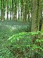 Woodland at Mescoed Mawr - geograph.org.uk - 820493.jpg